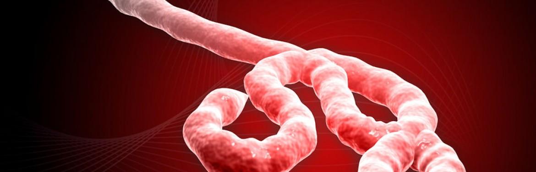 EFSA: Rizik od prijenosa ebole putem hrane